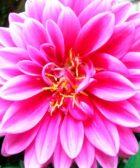 Flores Mexicanas, 16 flores que no sabias que eran mexicanas